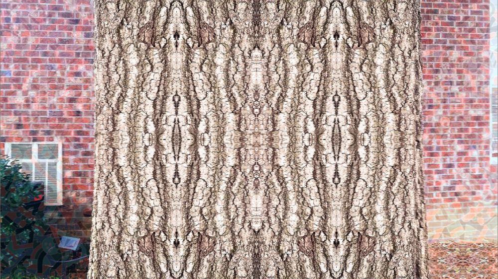 Symmetry_on_treebark