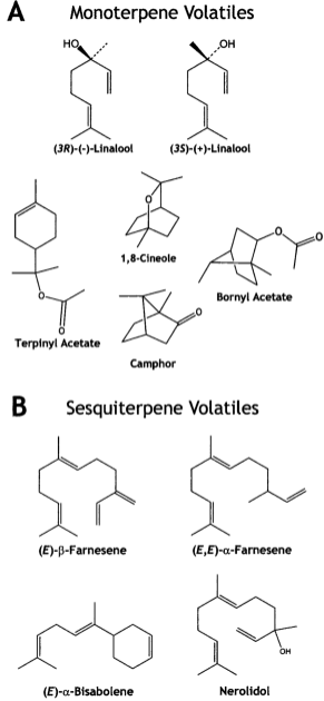 Structures-of-monoterpenes-A-and-sesquiterpenes-B-emitted-by-MeJA-treated-Norway