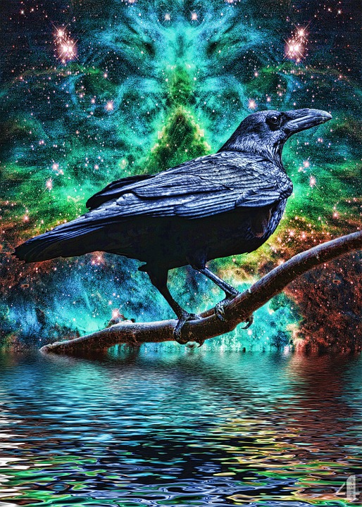 raven-99568_960_720