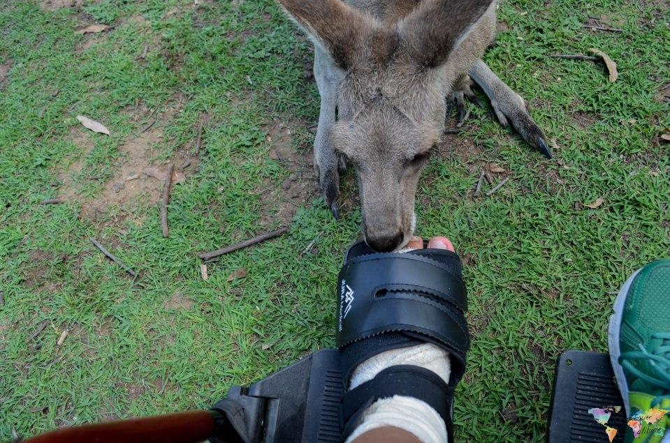 Brisbane-koala (13)