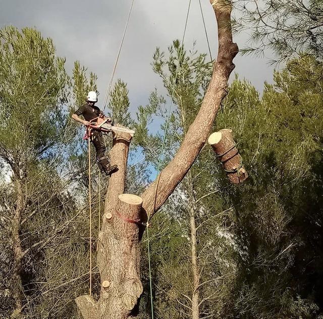Quantacav-arboriste-elagueur-demontage-retention-greement-poulies