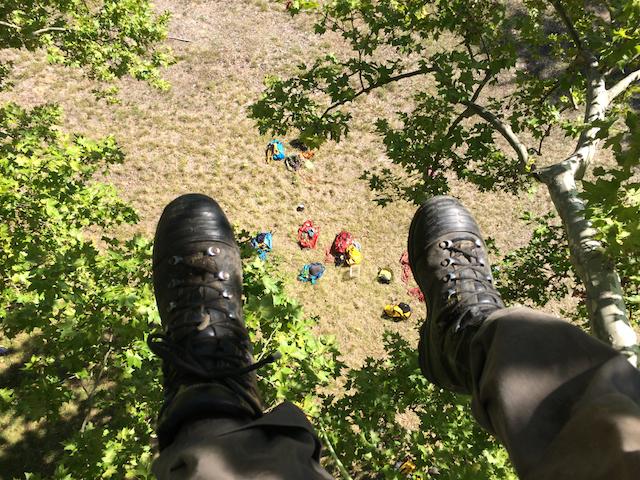 Grimper en haut d'un arbre, vue d'un arboriste