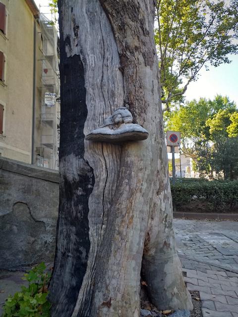 Quantacav-arboriste-expert-evaluation-champgnon