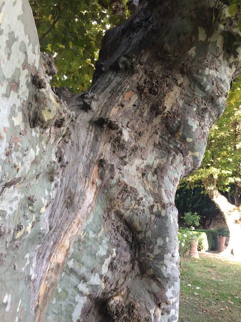 Quantacav-arboriste-expert-evaluation-maladie