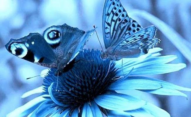 aura.soma-blu