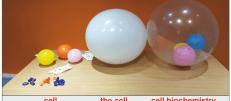cellbiochembaloon