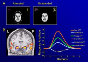 Change Detection in a Working Memory Task: fMRI BOLD Predicts Ta