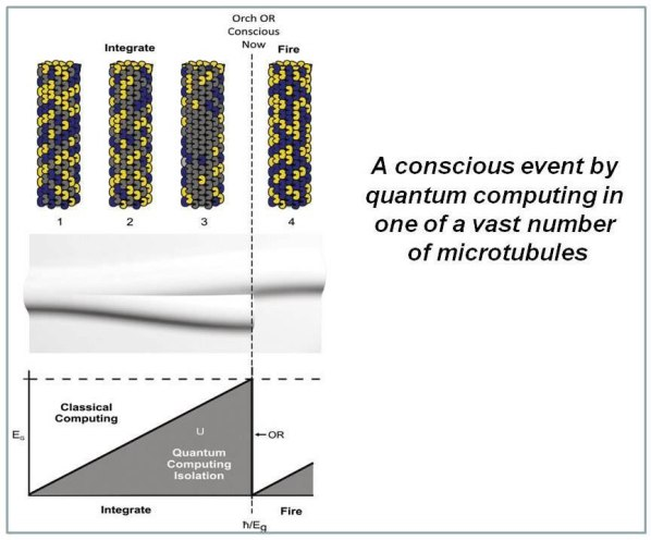 Fig.20: Top: Tentatively proposed picture of a conscious event by quantum computing in one of a vast number of microtubules all acting coherently so that there is sufficient mass displacement for Orch OR to take place. Tubulins are in classical dipole states (yellow or blue), or quantum superposition of both dipole states (gray). Quantum superposition/computation evolves during integration phases (1–3) in integrate-and-fire brain neurons, increasing quantum superposition EGEG (gray tubulins) until threshold is met, at which time a conscious moment occurs, and tubulin states are selected which regulate firing and control conscious behavior. Middle: Corresponding alternative superposed space–time curvatures reaching threshold at the moment of OR and selecting one space–time curvature. Bottom: Schematic of a conscious Orch OR event showing U-like evolution of quantum superposition and increasing EGEG until OR threshold is met, and a conscious moment occurs .