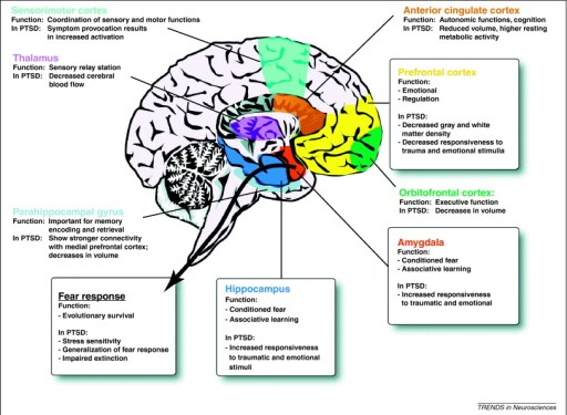 A schematic of the human brain illustrating how the limbic system is involved in posttraumatic stress disorder (PTSD). The prefrontal cortex (PFC) and the hippocampus both have dense connections to the amygdala, which is important for conditioned fear and associative emotional learning. The PFC is thought to be responsible for reactivating past emotional associations and is decreased in both responsiveness and density [7, 8, 14, 15]. The hippocampus is thought to play a role in explicit memories of traumatic events and in mediating learned responses to contextual cues; in PTSD, the hippocampus is decreased in volume [150] and responsiveness to traumatic stimuli [20, 150]. The top down control of the amygdala by the hippocampus and PFC might result in the increased activation of the amygdala, as is observed in subjects with PTSD [7, 8, 14, 15]. The end result of these neuroanatomical alterations is increased stress sensitivity, generalized fear responses and impaired extinction. Other regions including the anterior cingulate cortex, the orbitofrontal cortex, the parahippocampal gyrus, the thalamus and the sensorimotor cortex also play a secondary role in the regulation of fear and PTSD