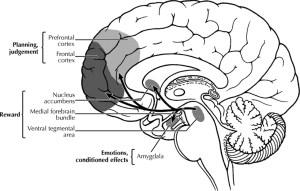 dopamine reward system