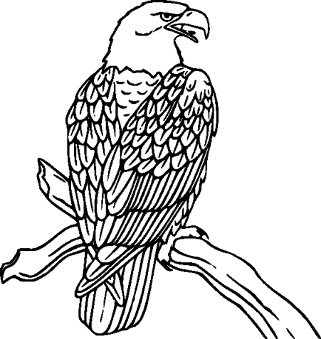 bird-coloring-pages