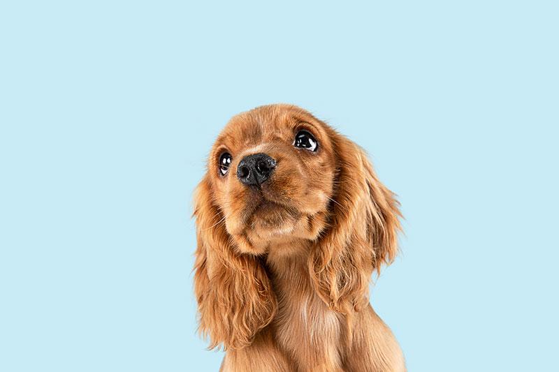 Comment faire vomir son chien