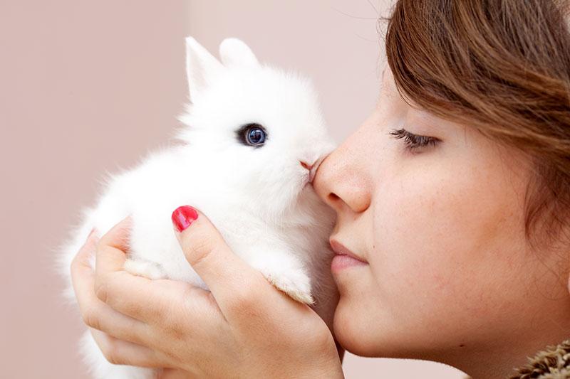 Eternuement du lapin : comment le détecter et le soigner ?