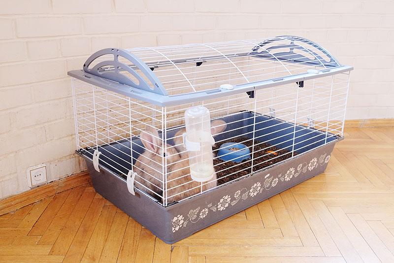 Deux lapins en cage qui font du bruit