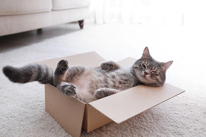 Un chat qui bave est souvent le signe que votre chat est détendu