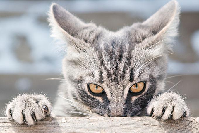 Veillez à bien couper les ongles de vos chats en respectant les étapes de cet article