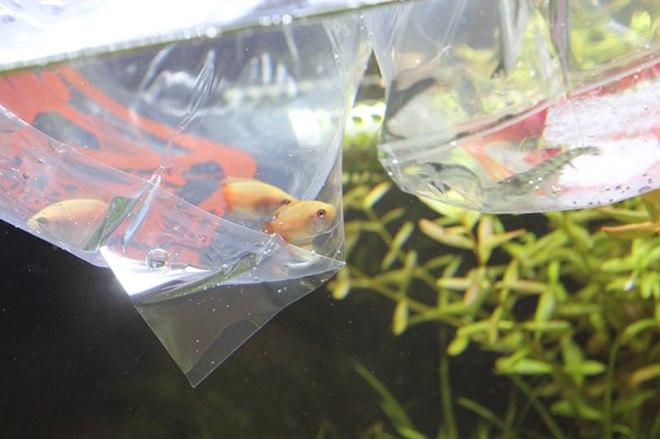 他の熱帯魚を入れる