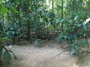 PuertoPrincesa.com – Underground River Tour - Bayawak
