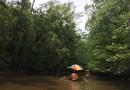 Mangrove Paddle Boat Tour in Puerto Princesa