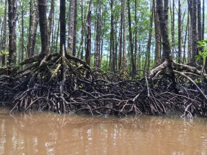 PuertoPrincesa.com – Mangrove Paddle Boat Tour. Photograph by EM@QUE.COM