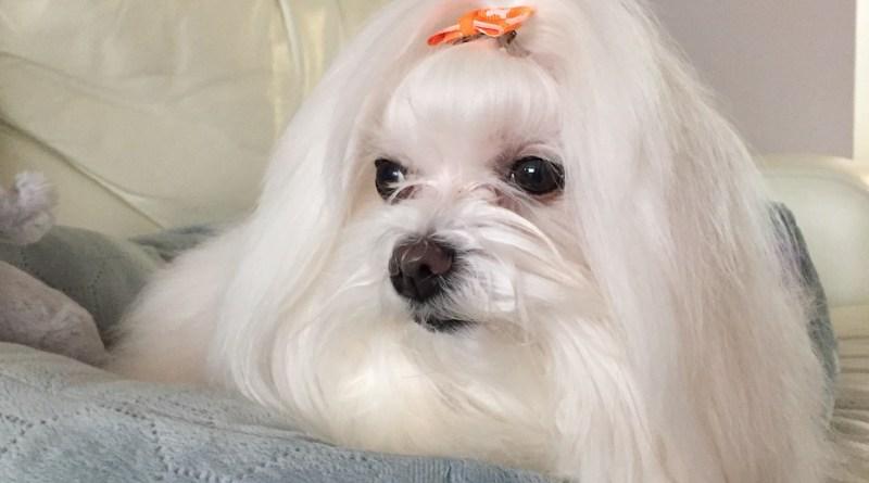 QUE.com.Paige.Dog.Pet