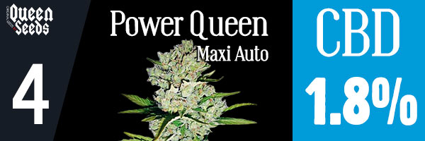 power queen cbd cannabidiol