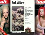 graine de cannabis - jack widow