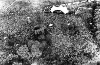 Hyde Park 1976