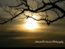 Sunset and Branch