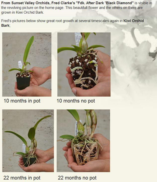 Young Plants Grown in Kiwi Orchid Bark with and without Pots for 10 and 22 Months