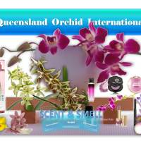 The Scents and Smells of Orchids