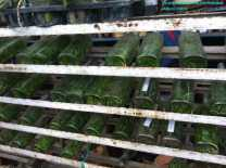 Orchid Flasks at Sanur, Bali (2)