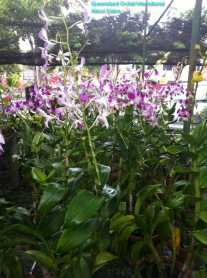 Orchid Nursery at Sanur, Bali (1)