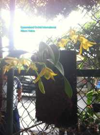 Orchid Nursery at Sanur, Bali (10)