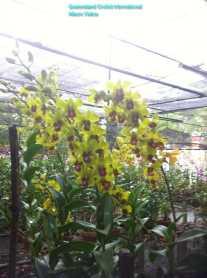 Orchid Nursery at Sanur, Bali (8)