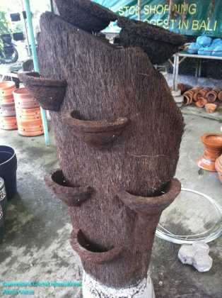 Tree Fern Orchid Stand in Nursery at Sanur, Bali (1)
