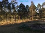 [28] Marburg 10 Acres - Land Outside Front Entrance