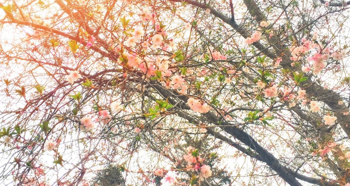 Spring Clean- Queenstown Life is hiring!