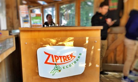 Reliving my childhood with Ziptrek Ecotours