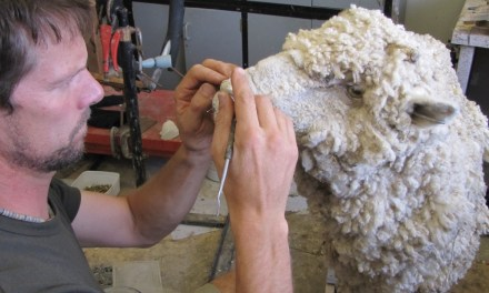 Locals- David Jacobs Taxidermist Queenstown