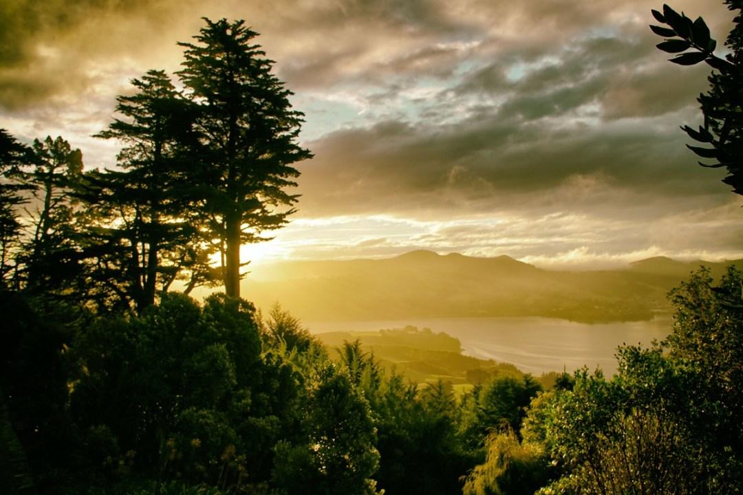 Wild Dunedin 2018