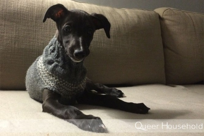 10 facts of life with a puppy - Queer Household