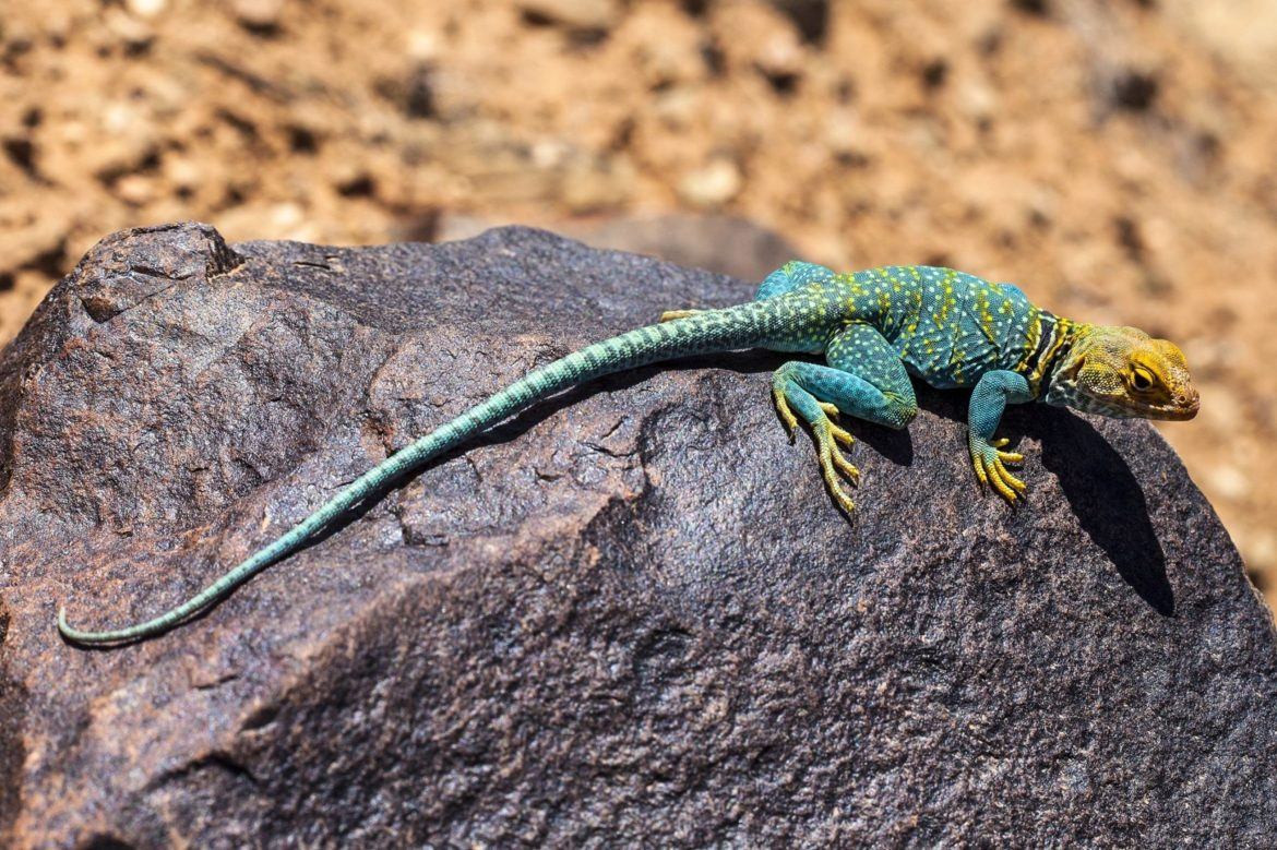 4 Animals That Have Asexual Reproduction That You Didn't Know About