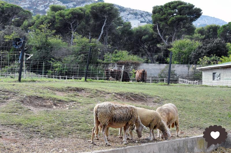 Ferme pédagogique du Roy d'Espagne : prochains rendez-vous