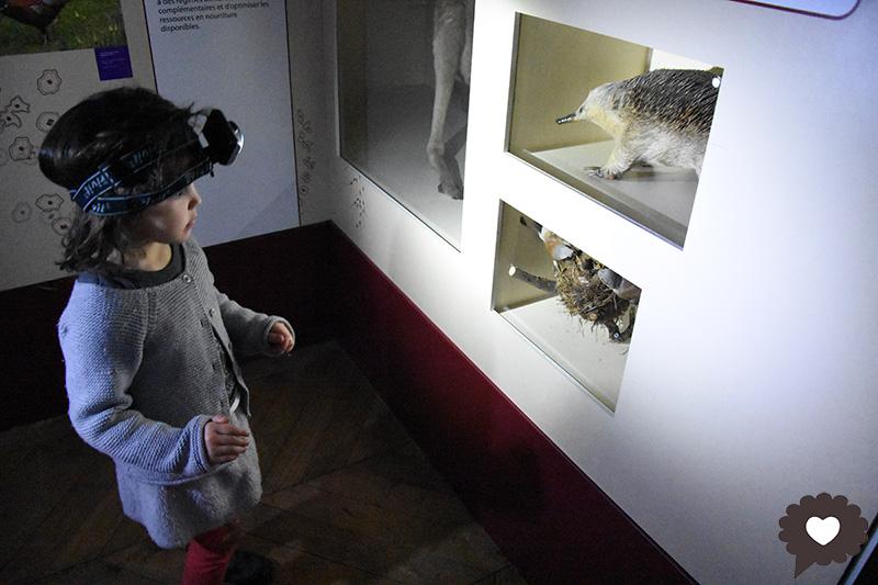 Safaris au Musée d'Histoire Naturelle