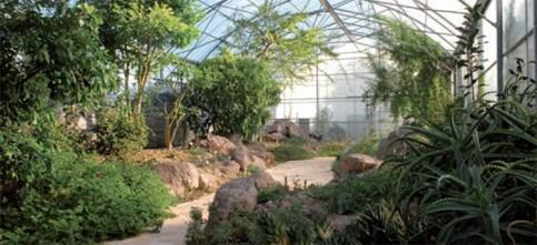Découverte du Jardin d'AFrique au Jardin Botanique