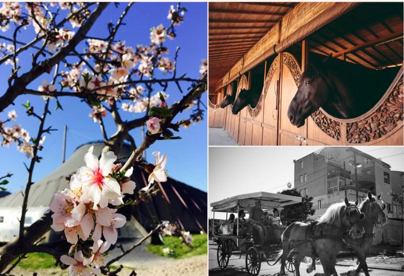 Jour de printemps au Centaure