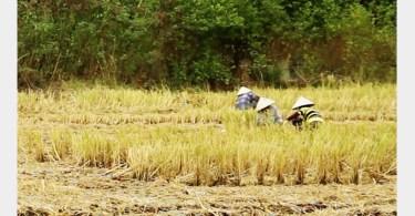 Journée Vietnam à La Criée