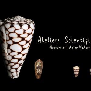 ateliers pédagogiques au Muséum d'Histoire Naturelle d'Aix en Provence