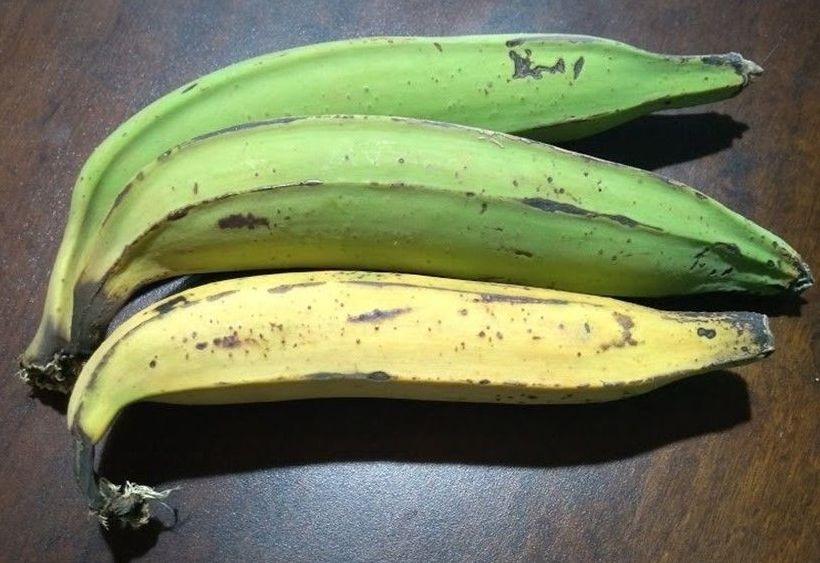 Cultivo da banana-da-terra é estudado em SP